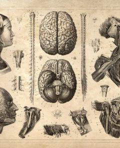 anatomia d emi padre