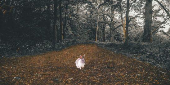 isla delos conejos principal